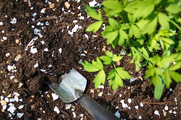 eggshells-garden-pests