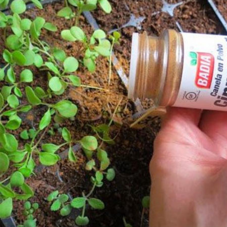 gardening 26