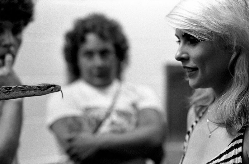 Debbie Harris smiles while looking into the eyes of a slithering snake.