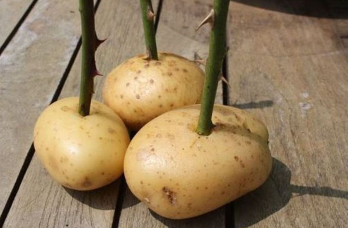 potato gardening hacks